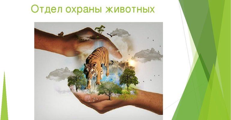 Сообщение об охране животных в России
