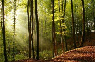 Стихи про лес