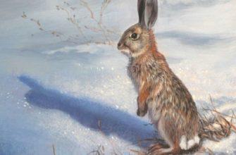 Стихи про зайца
