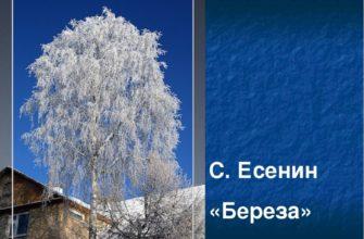 Стихотворение Есенина «Береза»