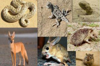 Животные пустыни России