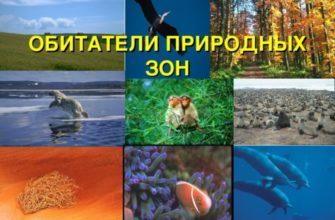 Животные в разных природных зонах