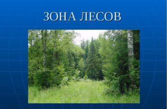 Зона лесов России