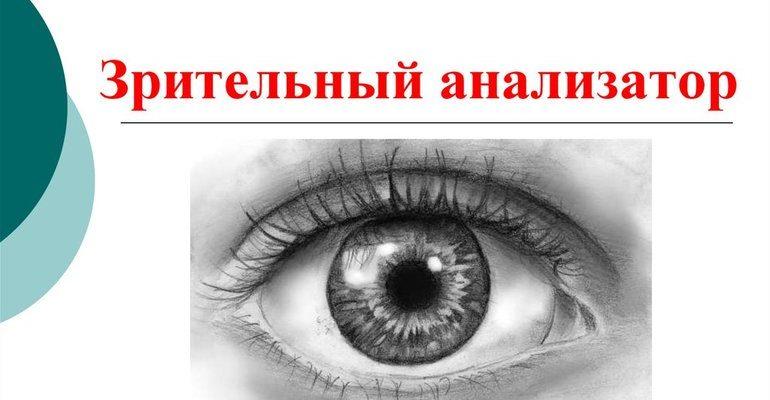 Зрительный анализатор (биология 8 класс)