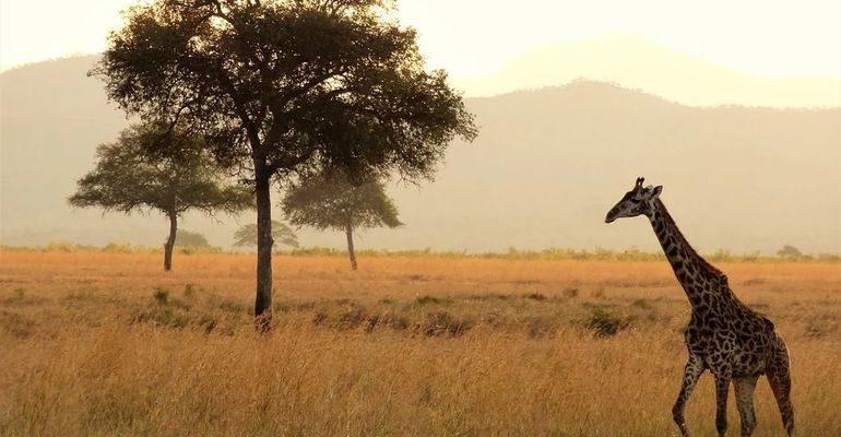 Африка климат