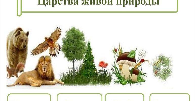 Царства живых организмов таблица