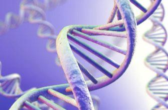 Генотип и феонтип кратко
