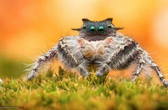 Интересные факты о паукообразных