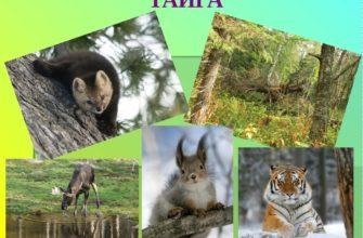 Какие животные обитают в субтропиках