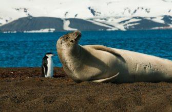 Какие животные живут в антарктиде