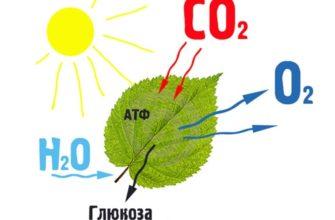Каково значение фотосинтеза в природе