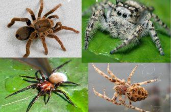 Класс паукообразных
