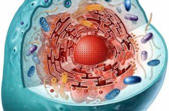 Клетка живого организма