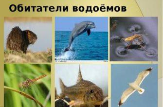 Обитатели соленых и пресных водоемов