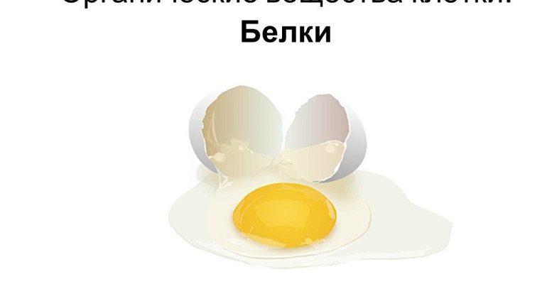 Органически е вещества белки