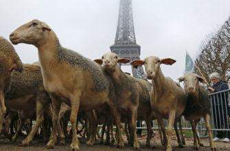 Особенности сельского хозяйства франции