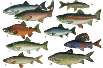 Отряды рыб