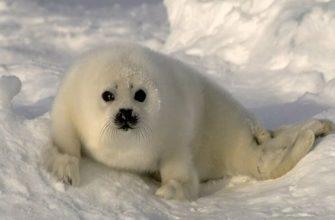 полярные животные