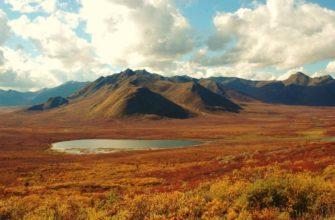 Природная зона россии тундра