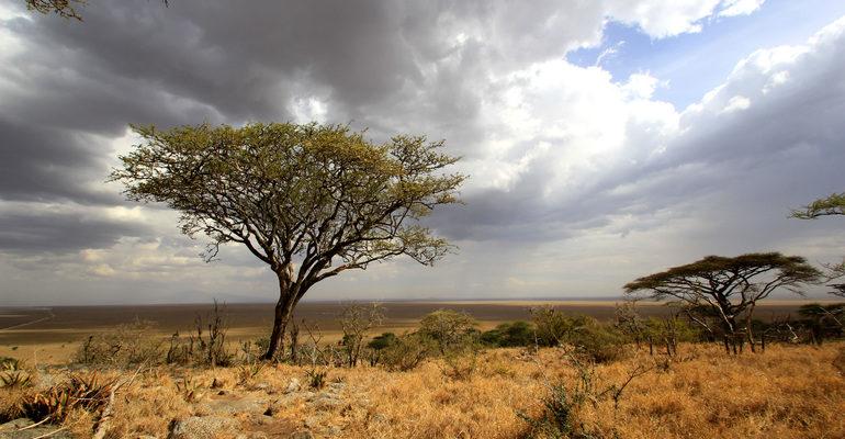 Природная зона саванн и редколесий