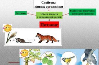 Признаки живых организмов