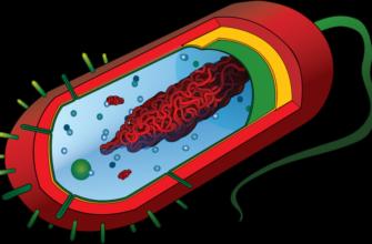 Прокариотическая клетка