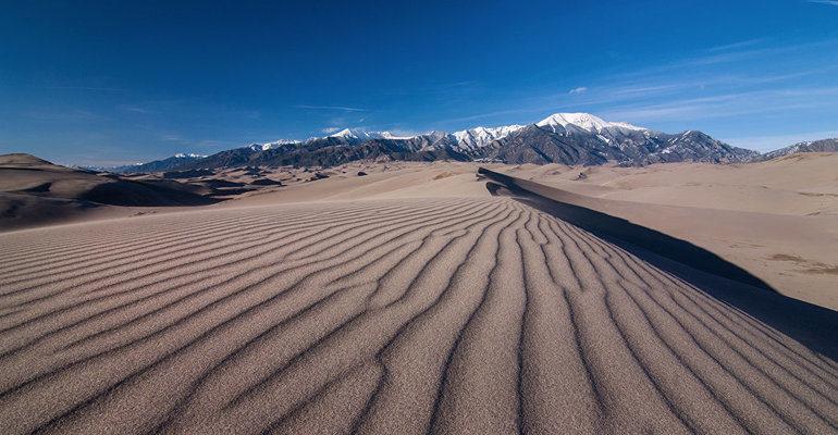 Пустыни животные и растения (окружающий мир, 4 класс)
