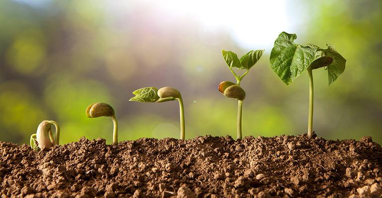 Размножение и развитие растений 3 класс видеоурок