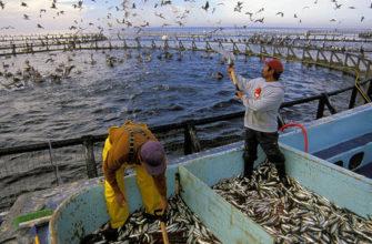 Рыбное хозяйство и рыбоводство предприятия россии