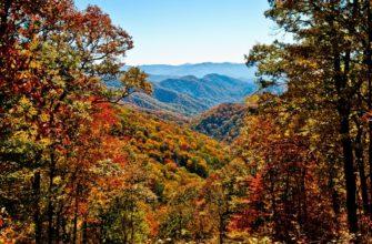 Широколиственные и смешанные леса характеристика смешанных лесов особенности смешанных и широколиственных лесов