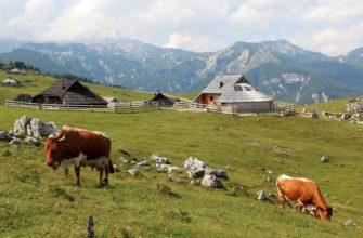 Среднеевропейский тип сельского хозяйства