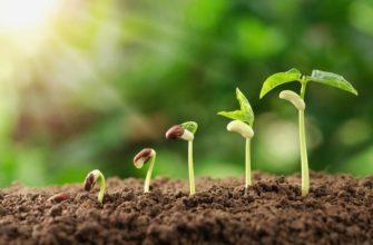 Виды размножения растений