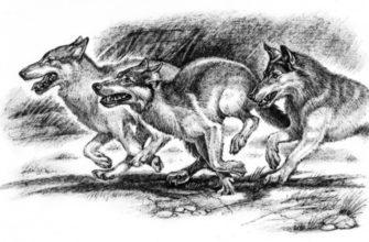 Волки краткое содержание