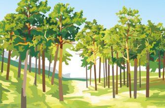 Загадки про лес