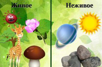 Живая и неживая природа примеры (окружающий мир 1 класс)