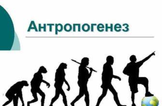 Антропогенез в биологии