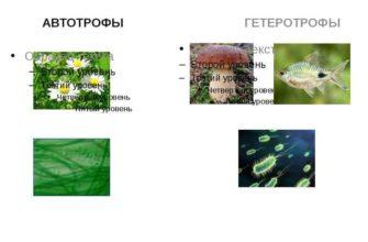 Автотрофы и гетеротрофы