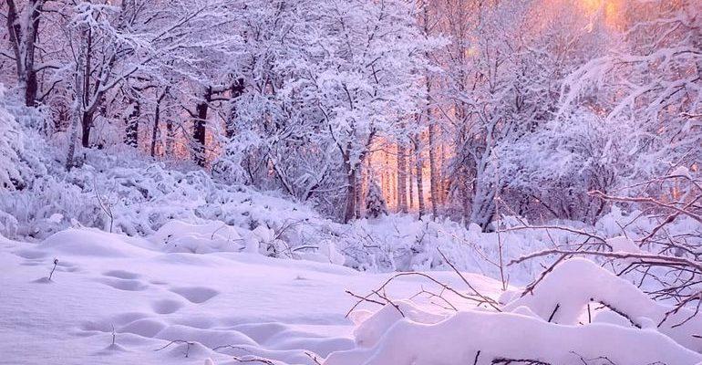 Чародейкою зимою околдован лес стоит анализ