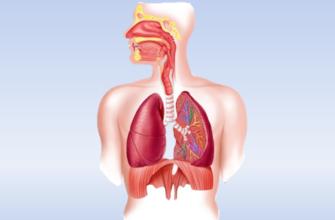 Дыхание клетки 5 класс биология