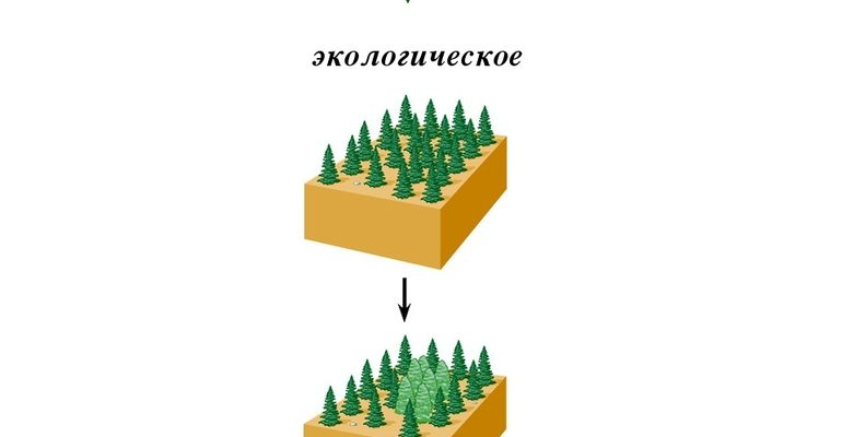 Экологическое видообразование