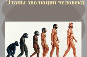 Эволюция человека этапы