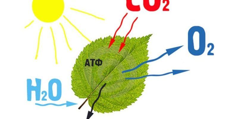 Фотосинтез это в биологии