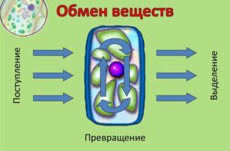 Какие существуют типы обмена веществ