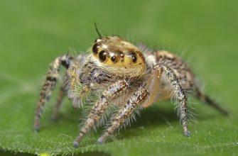 Органы чувств паукообразные