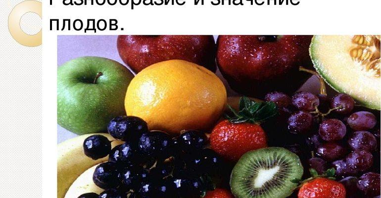Плод классификация разнообразие