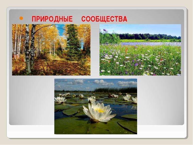 Измайловский кремль москва фото симпатичные машинки