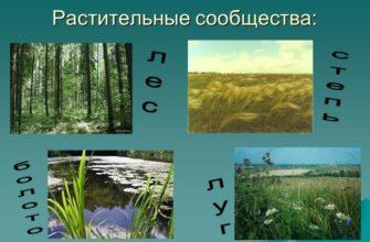 Растительные сообщества в биологии